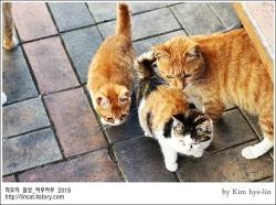 [적묘의 고양이]부산대 고양이가족,삼색아기냥,노랑둥이들, 커여워