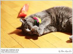 [적묘의 고양이]모노톤 자매, 묘르신들의 월간낚시,파닥파닥,13살고양이가 막내일때