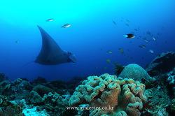 Coral of Raja Ampat, Indonesia