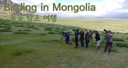동아시아 철새 루트 탐방 : 몽골 6박8일 2019