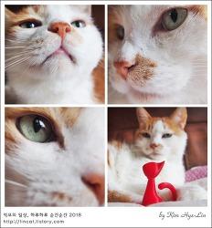 [적묘의 고양이]초롱군 별이 되다,19살 묘르신,무지개다리,내 인생의 반과 네 묘생 모두,20180818, 안녕 또 만나