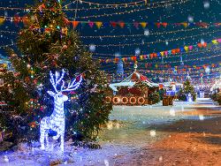 눈꽃축제, 얼음낚시, 불빛축제! 겨울 축제로 떠나는 기차 여행