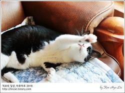 [적묘의 고양이]14살 할묘니,턱시도 까칠냥,깜찍양의 격한 놀이