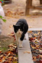 고양이 와룡공원