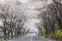 사천 가볼만한곳 잔드리제 벚꽃터널 서광사 여행