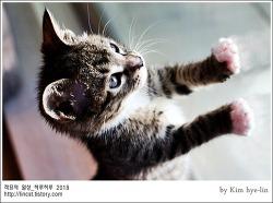[적묘의 고양이]루이비통 몰고가세요,집사급구,친구님네 임보냥, 2개월령 태비냥이, 입양완료