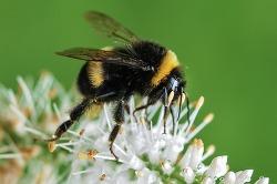 면역력강화에 좋은 꿀 VS 로열젤리 VS 프로폴리스 VS 비폴렌의 효능과 차이점, 부작용