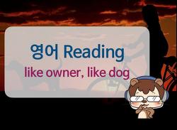 [영어독해잘하는법] Like owner, like dog 1/3ㅣ라쿤잉글리시