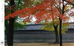 가을 고궁 - 창경궁에서 #5