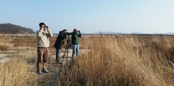 Guided Birding Tour in Korea