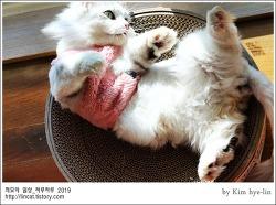 [적묘의 고양이]친구님네 먼치킨,짤뱅,월간낚시 파닥파닥,커여워,심장에 안 좋은 맹수