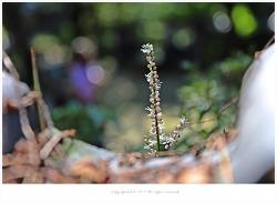길상사 10월 야생화 - 왜승마.투구꽃.누린내풀.참취꽃.과남풀.이삭여뀌.해국