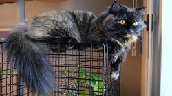 고양이가 좋아하는 올리브 나무