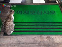 고양이 양초, 고양이 인사