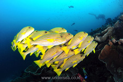 Reef fishes of Raja Ampat, Indonesia