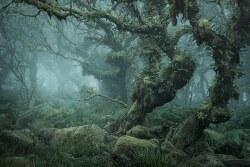 Mystical Photos of the Enchanting English Forests of Wistman's Wood     신비스럽고 으시시한 고대 삼림 지대 위스트만의 나무