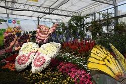 함평나비축제 - 나비축제 가서 나비도 보고, 유채꽃도 보고, 육회비빔밥도 먹자