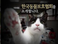 한국동물보호협회를 소개합니다.