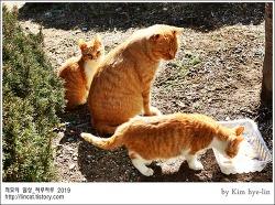 [적묘의 고양이]스카이캐슬고양이,노랑둥이 일족,부산대캠퍼스고양이,설날특식