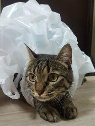 [고양이 상식/사료 성분]고양이 사료 성분에 대해 공부하자!
