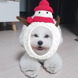호두 늦었지만 메리크리스마스에용~
