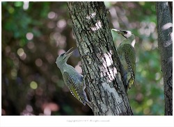 올림픽공원에서 만난 귀여운 녀석들 - 딱따구리.직박구리.참새.토끼