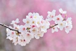 [시] 주명숙 - 꽃벗