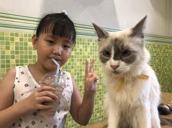 [시은공주] 동성로 고양이 까페에서