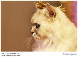 [적묘의 고양이]친구님네 임보냥,페르시안 고양이,안소니,럭셔리인테리어필수요소