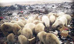 러시아 북극곰 50마리 마을 민가로 내려가