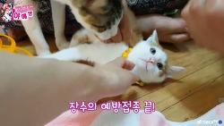 [야메쌤]아기고양이 주사 놓기 위한 험난한 과정 / BJ야메쌤