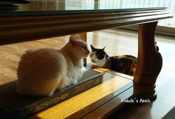 고양이들의 겨울 풍경