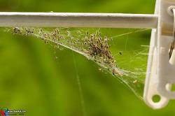 빨래집게와 거미 유충