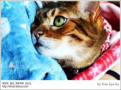 [적묘의 고양이]친구님네 뱅갈,발톱깍기 참 쉽죠,고양이발톱깍기,도도의 도도하지 않음