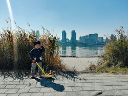 2018년 10월 가을 핑크뮬리를 찾아 떠난 뚝섬 한강공원