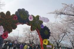 2019 여의도봄꽃축제