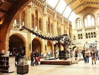 런던여행, 런던 자연사박물관