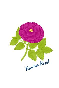 [꽃] bourbon rose
