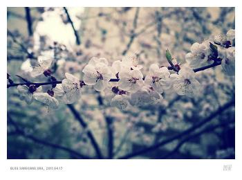 봄은 벌써 지나가고