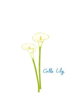 [꽃] Calla Lily