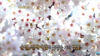 벚꽃은 우리나라 꽃입니다.