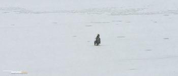 함박눈 맞는 참수리 Steller's sea eagle #4