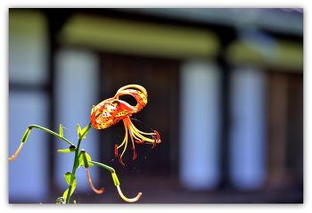 안동 고택 뜰에핀 꽃 7ㅡ27
