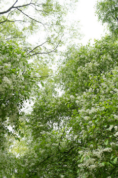 나무, 꽃, 연못