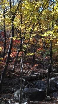 강원도 설악산 단풍나무 낙옆 동영상 30초 찰나의 기록