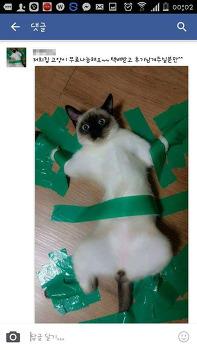 고양이 묶어 놓은 넘.. 내가 언젠가 너도 묶어 놓을 거다.