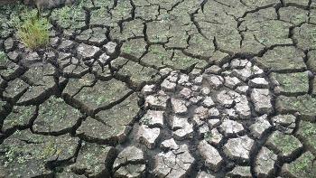 최악의 가뭄이 이어지는 제주도 모습