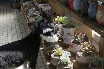 쎄리(16살) + 기타 다육식물