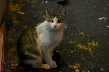 길에서 만난 고양이