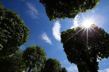 숲, 햇살, 빌딩, 하늘 그리고 일상